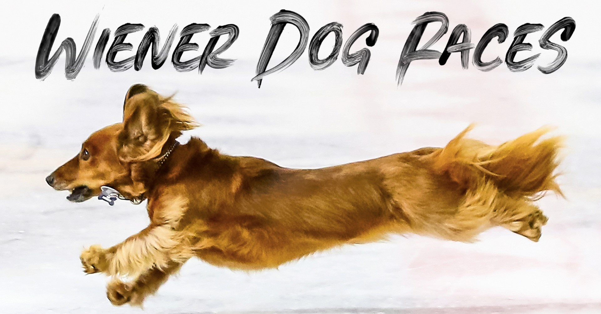 Knoxville Ice Bears Wiener Dog Races